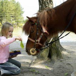 Ponyvakantie erperheide