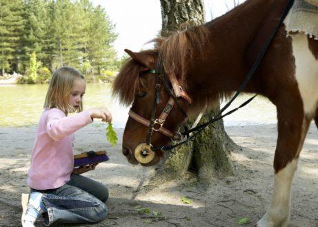 Pony vakantie bij Center Parcs