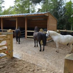 Ponyvakantie