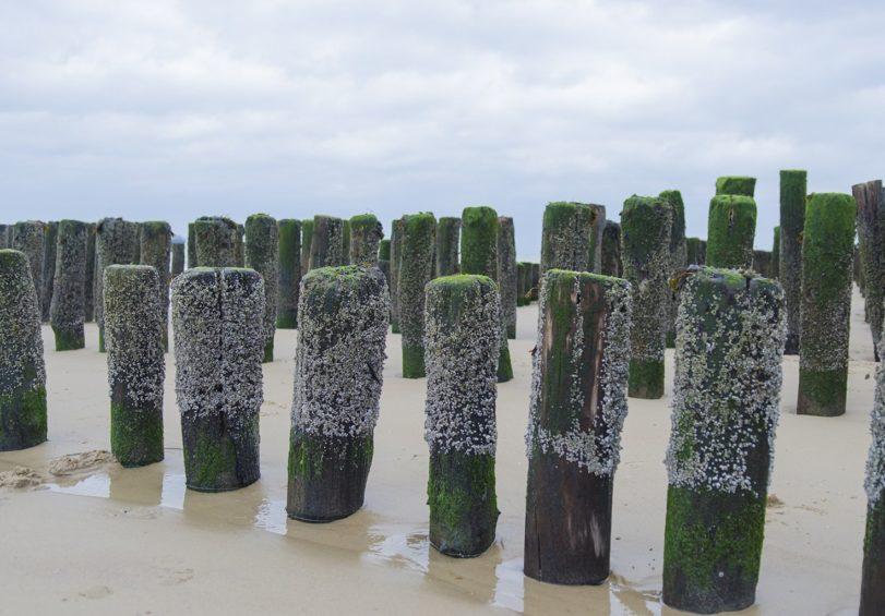 strand-nieuwvlietbad-2
