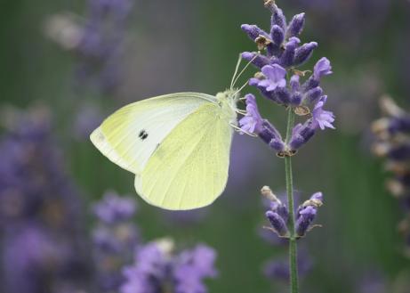Vlinders spotten tijdens uw vakantie