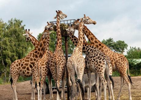 Onderzoek: verschillende diersoorten in Nederlandse dierentuinen